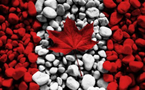 الناتج المحلي الإجمالي الكندي يستقر على نحو غير متوقع