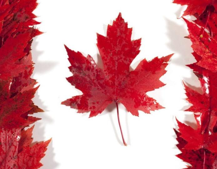 أسباب تراجع الدولار الكندي بعد البيانات