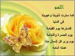 الصورة الرمزية noha elahwany