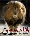 الصورة الرمزية alaa_alaa12209