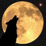 الصورة الرمزية ذئب الجبل