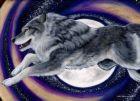 الصورة الرمزية spiral_wolf